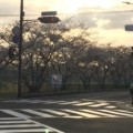 20140331桜