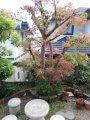 202012_庭木(イロハモミジ)